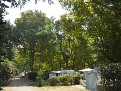 Camping Albizia - Camping Pyrenees-Orientales - Image N°2